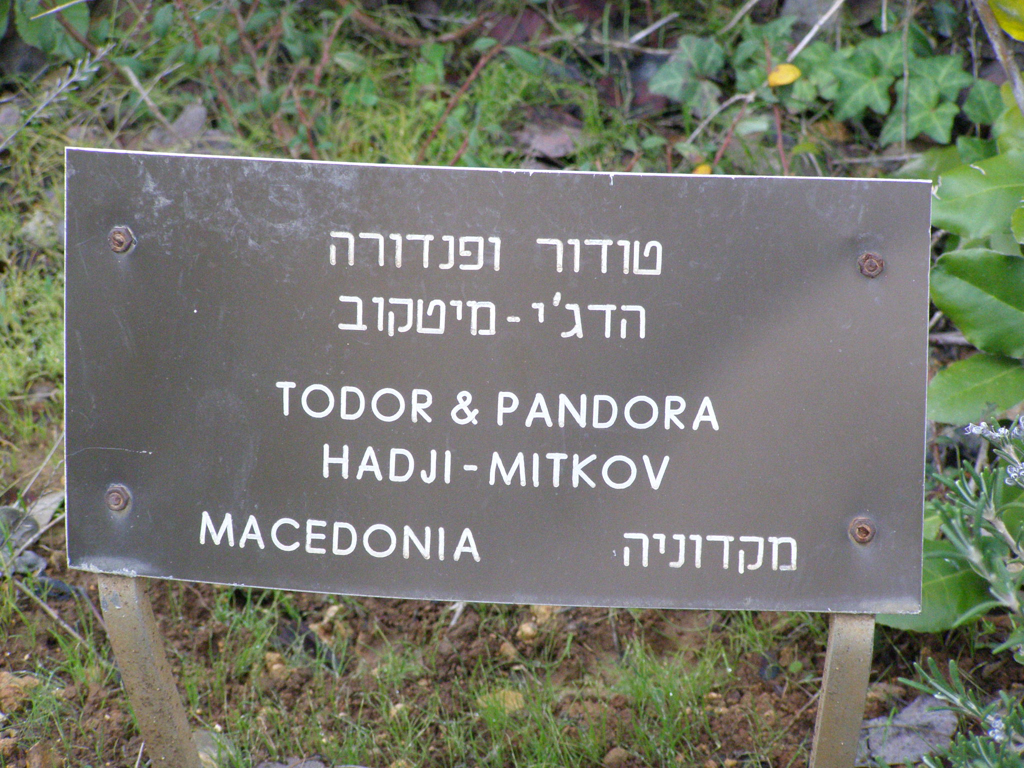 Tree in Honor of Mitkov Pandora