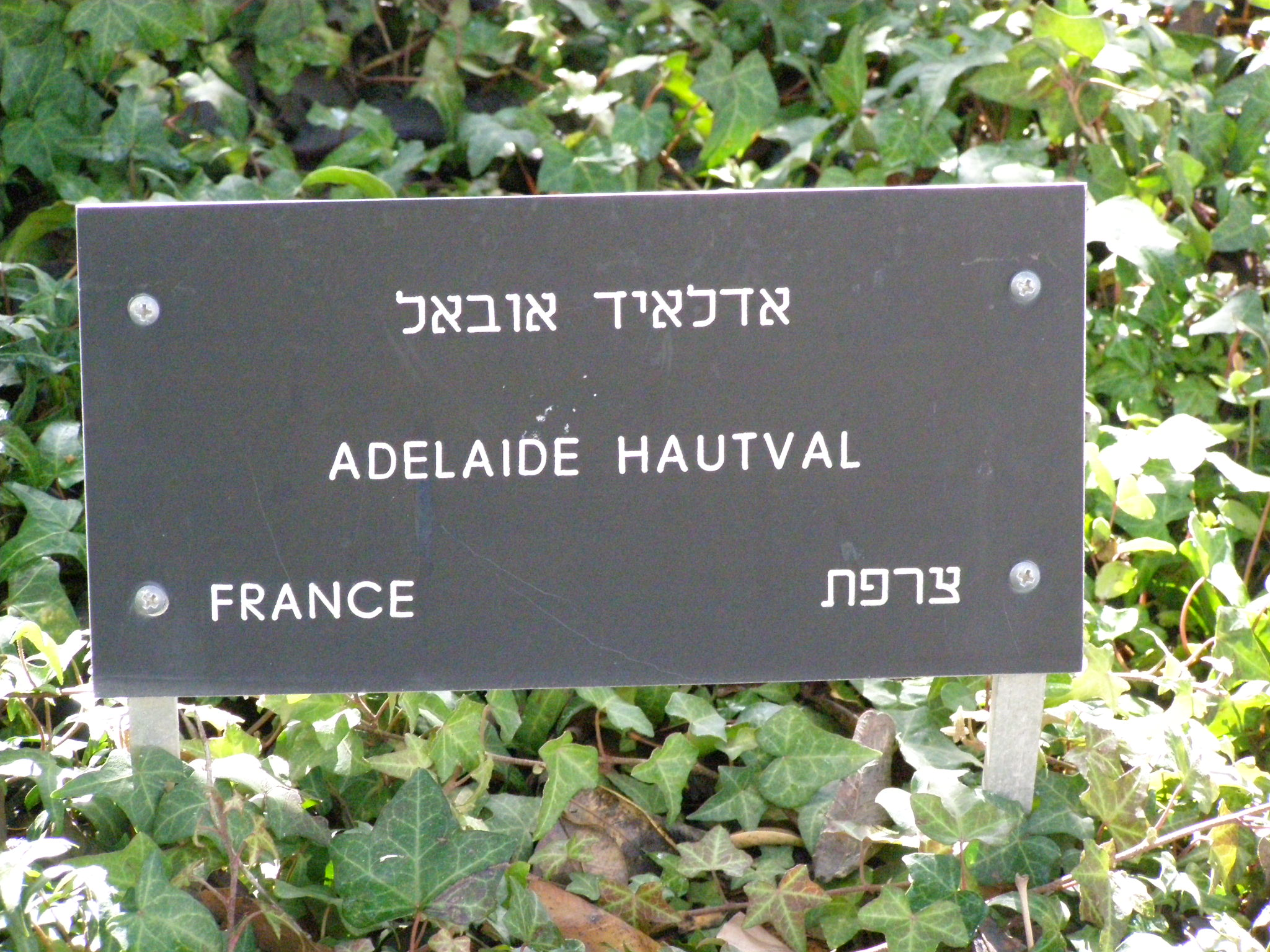 Tree in Honor of Hautval