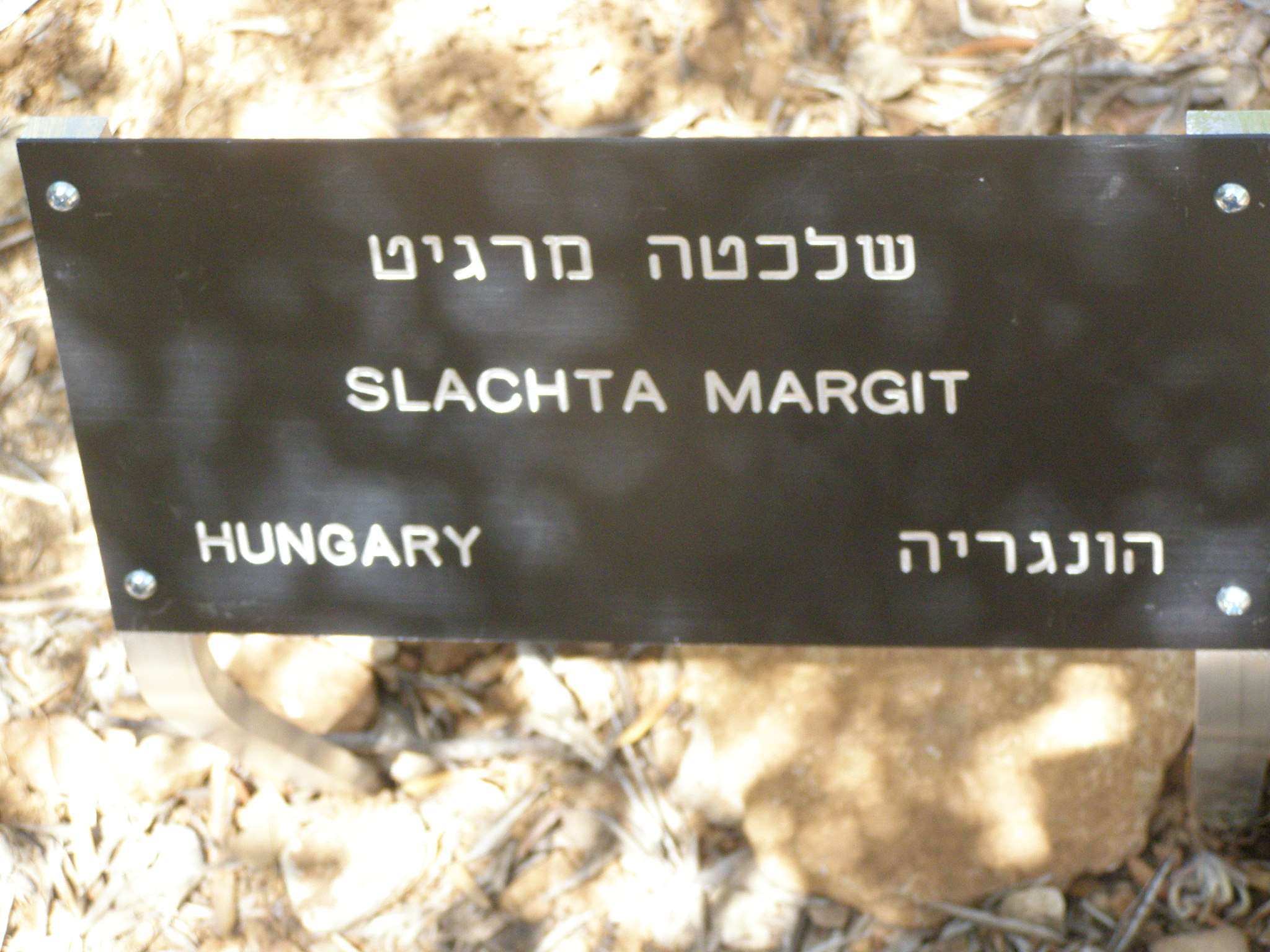 Tree in Honor of Slachta Margit
