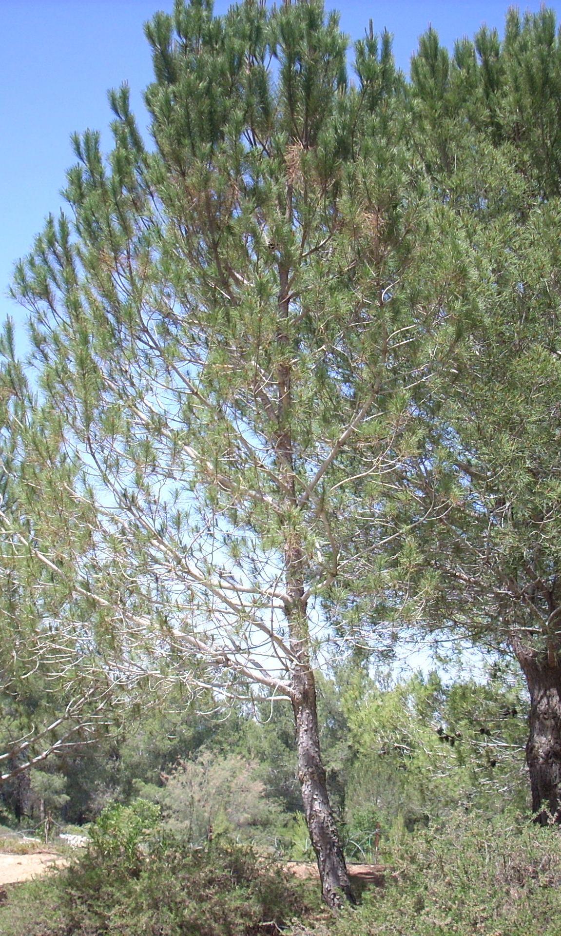 Tree in Honor of Beitz
